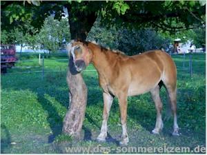 Pferd juckt an Baum